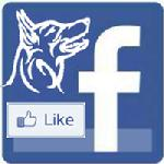 Dutch Shepherd Dog Club of America Facebook page