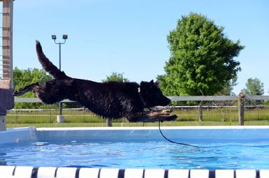 Dock Jumping lessons at Cher Car Kennels