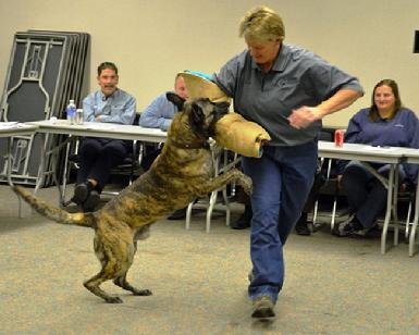 Dog Bite Prevention Training by Cher Car Kennels
