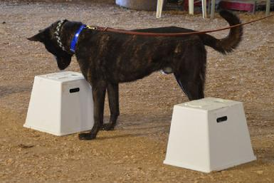 Nosework classes at Cher Car Kennels
