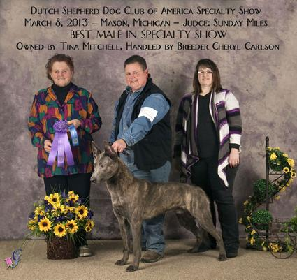 Best Male Dutch Shepherd at Dutch Shepherd Dog Club of America Specialty Show