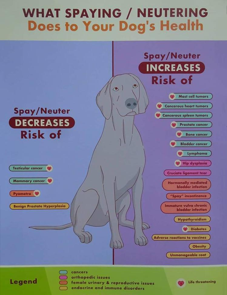 4be227e1c842 Spay & Neuter Adverse Effects